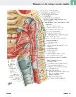 Atlas de Anatomia Humana Netter 6ed Medil