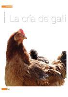 Crias de Gallinas Ponedoras