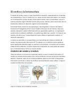 El Cerebro y La Lectoescritura