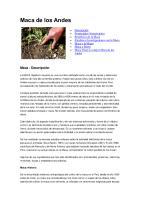 Maca de Los Andes