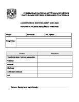 Reporte de Pruebas Bioquimicas Primarias